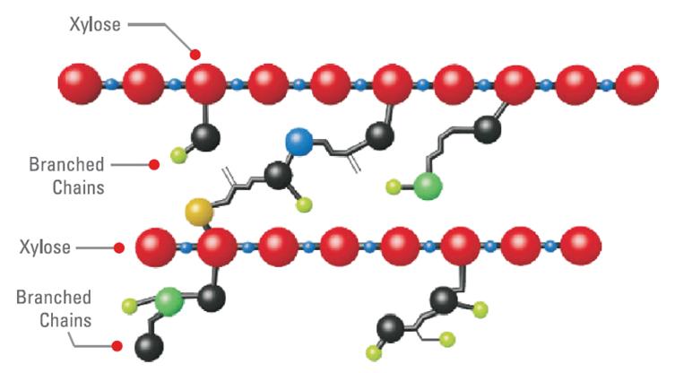 Figure 1: Schematic representation of Arabinoxylan Structure (https://www.kemin.com/in/en/products/kemzyme-xpf).
