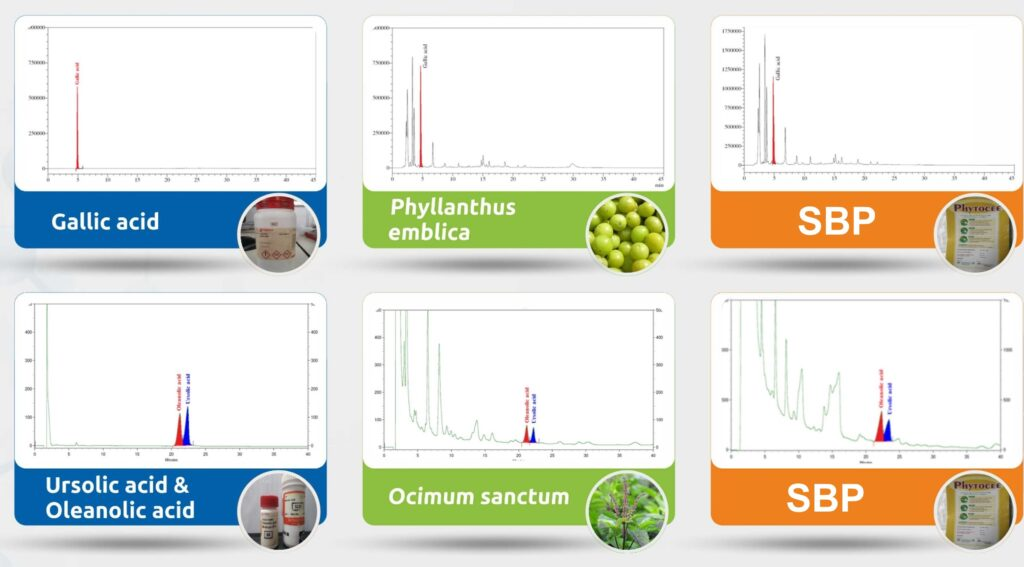Figure 2: Reference phytochemicals are selected to be standardized in SBPs.