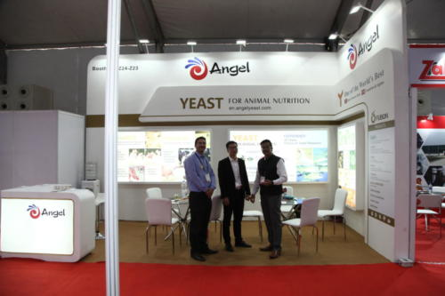 Angel Yeast